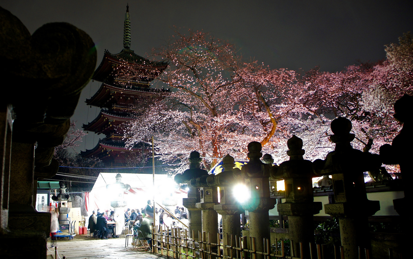 "Ueno Park cherry blossom night illumination ""Yozakura"""